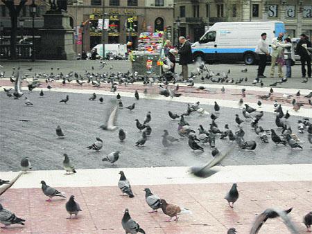 Asesino en serie de... palomas