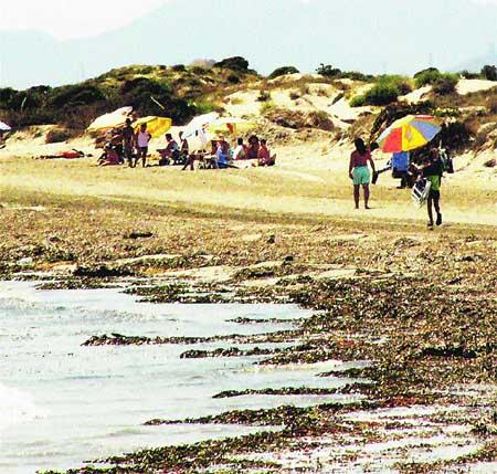 Una plaga de algas invade el Mar Menor y va a más