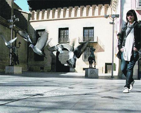 En Zaragoza sobran más de la mitad de las palomas