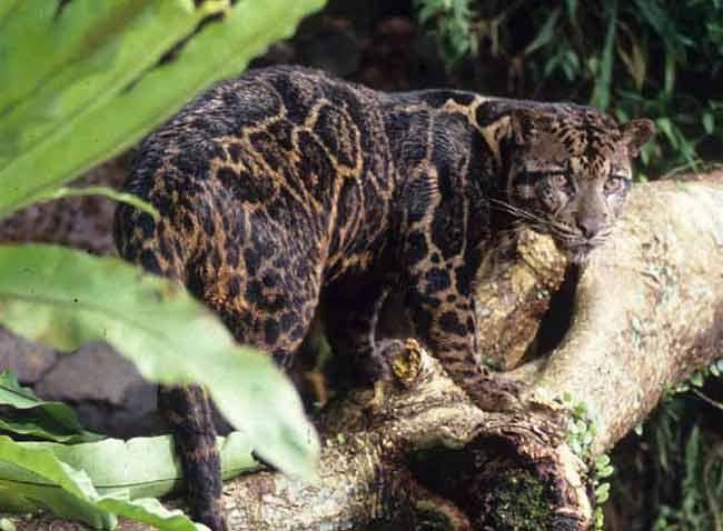 Nuevas Especies De Animales Encontradas (recientes)
