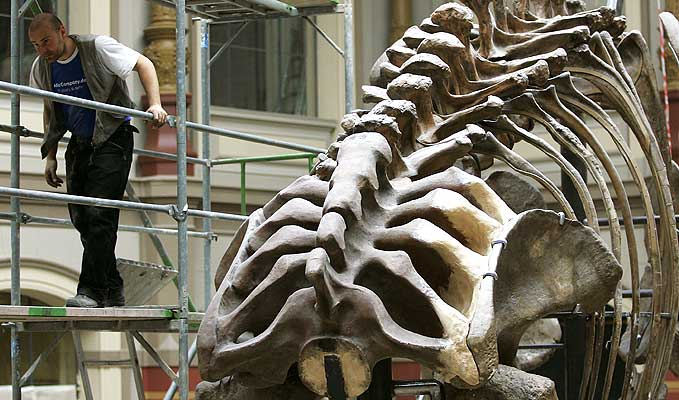 Animales y huesos prehistoricos