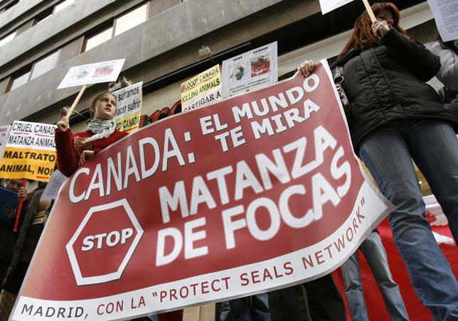 Protestas contra las matanzas de focas - Madrid