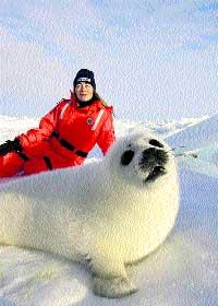 «Ahora matan más focas que en los años 70 y 80»