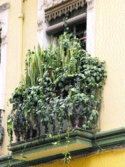 Una selva en el balcón