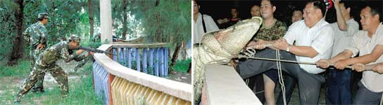 Un cocodrilo ha devorado a un niño de 9 años en China