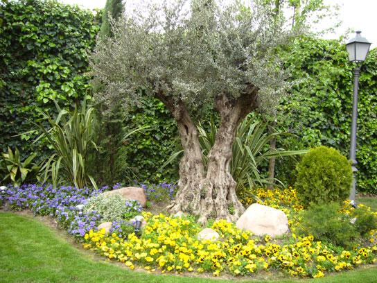 Vista del Jardín de la maternidad del Ruber