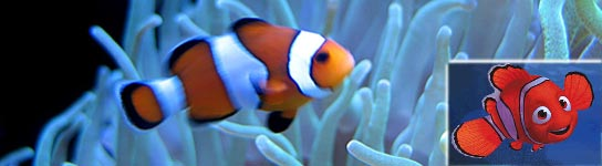 'Nemo' sabe volver a casa