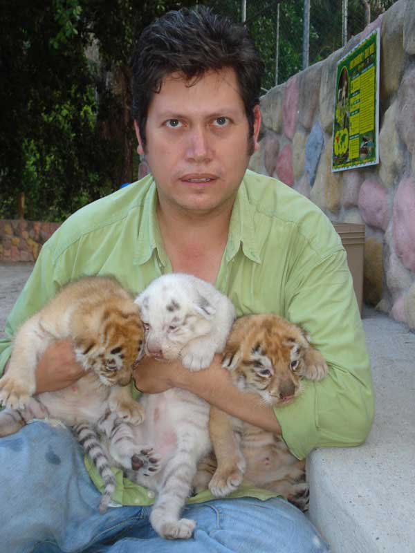 Los bebés de tigre
