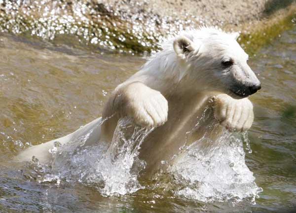 Knut en la 'piscina' de su casa.