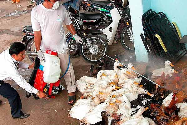 Veterinarios desinfectando una granja en Vietnam