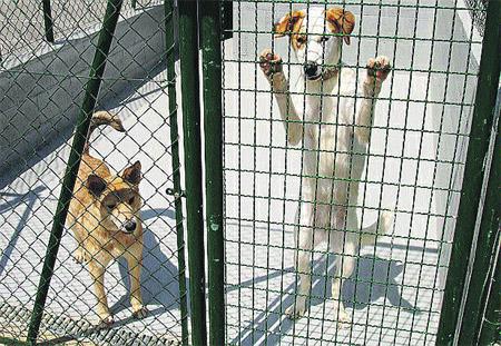 Nueva perrera en el Urgell