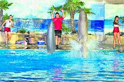 Exhibición de delfines por la noche