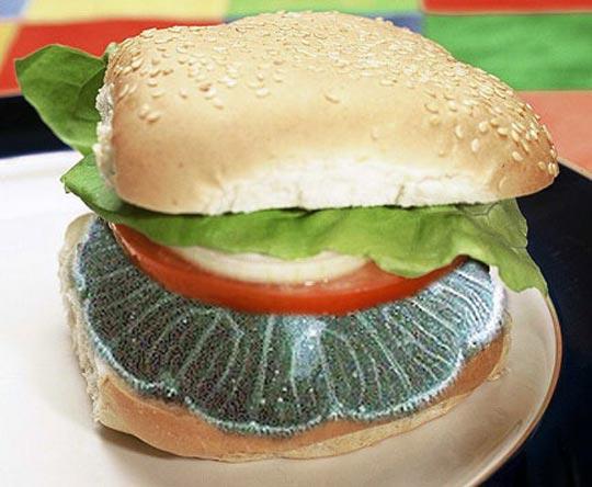Cocina con medusas - Como se alimentan las medusas ...