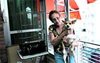 Murcia sacrifica entre 8 y 9 perros abandonados al día