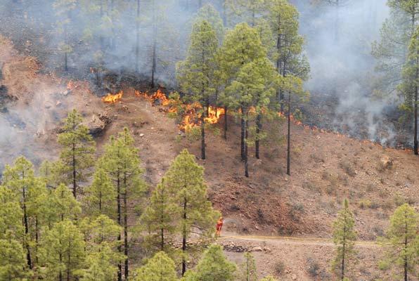 Los incendios forestales que se registran en Gran Canaria se originan por el factor humano