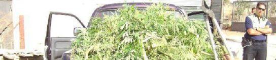 Detenido un joven de 21 años por tener una plantación de marihuana en su casa