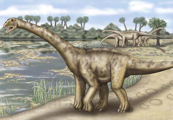 El turiasaurius, el dinosauro más grande de Europa