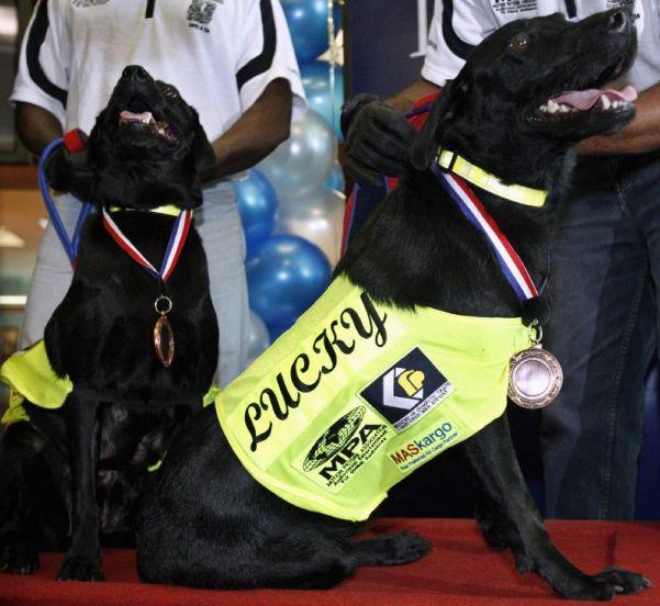 Lucky y Flo reciben una medalla de oro tras descubrir dos millones de discos piratas valorados en seis millones de euros