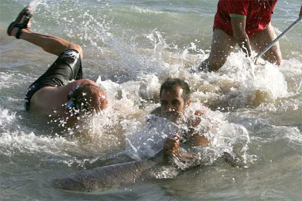 Captura del tiburón