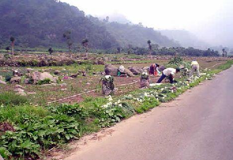 Cultivando cebolla trabajaban los 'irregulares'