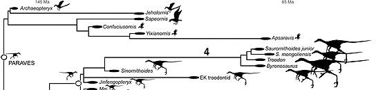 Esquema de evolución dinosaurios-aves