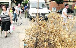 El arreglo de calles deja Ciudad Jardín sin árboles