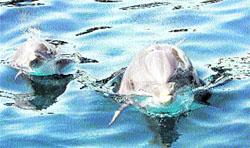 Despídete de los delfines