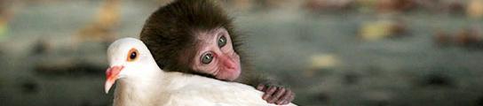 El macaco que amaba a la paloma