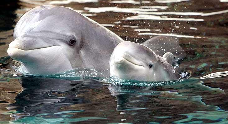 Una constitución para delfines y ballenas