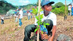 Nuevos árboles en Panamá
