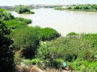 Una guía implantará los usos lúdicos y de ocio en el Guadalquivir