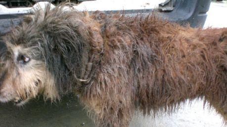 Uno de los perros, con muestras de la suciedad acumulada.