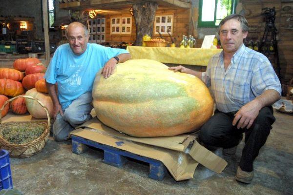 Calabaza gigante