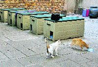 P gina 2 jardines para los gatos callejeros for Ahuyentar gatos jardin