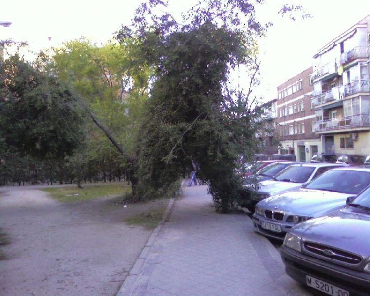 Un árbol en medio de la acera