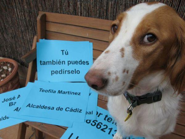 Mona pedirá a los alcaldes que cancelen los contratos con la perrera de puerto real 544