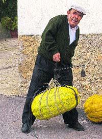 Recogen en Moratalla una calabaza de 26 kg