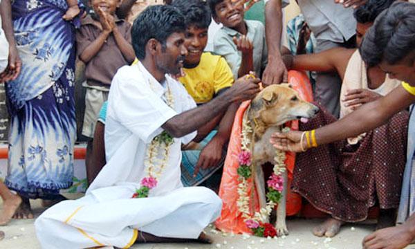 Un hombre indio se casa con un perro