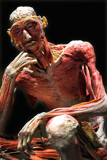 'Bodies': cadáveres en el mus