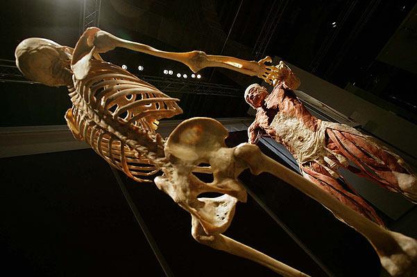 'Bodies': cadáveres en el museo
