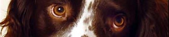 El cachorro Taffy