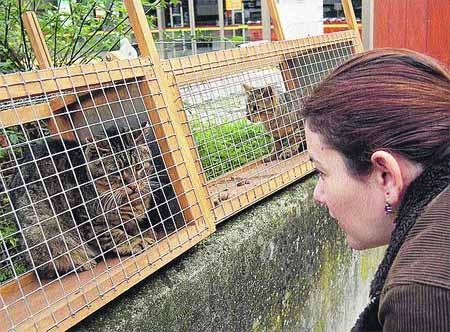 Los gatos 'presos', libres