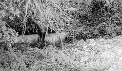 Argayos de tierra en los ríos de Grao