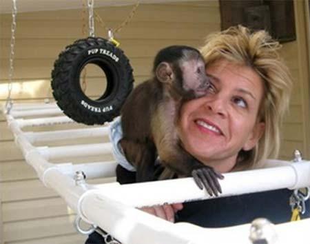 'Armani', el mono capuchino