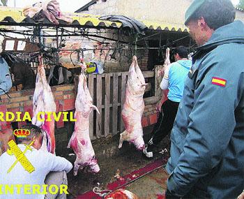 Pillan a 100 magrebíes que descuartizaban corderos ilegalmente
