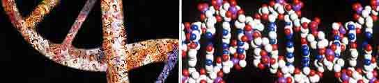 El mayor estudio gen�tico sobre el c�ncer de p�ncreas localiza d�nde est� el mayor riesgo