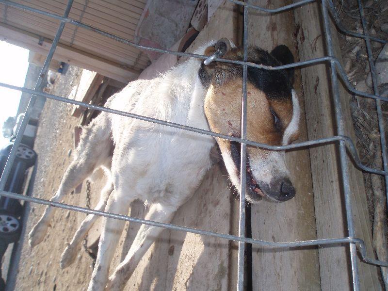 Uno de los canes ahorcados el miércoles
