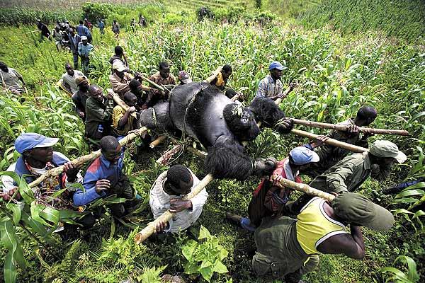 World Press Photo-2008-