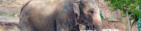 Petita, la elefanta fea