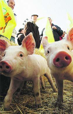 Los ganaderos reparten caldereta para mostrar que la crisis los arruina